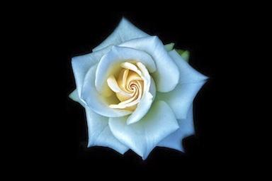 Floral Noir II